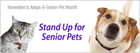ADOPT A SENIOR PET MONTH